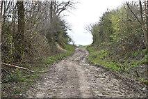 TQ6139 : To Little Bayhall by N Chadwick