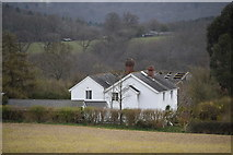 TQ6138 : Dodhurst by N Chadwick