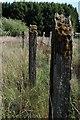 SO6414 : Railway fencing at Bilson Yard by John Winder