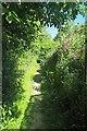 TL5109 : Sweet Peas by Footpath 192_3 by Glyn Baker