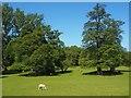 SK2571 : Chatsworth Park by Graham Hogg