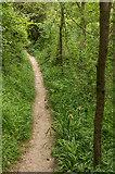 TQ2152 : Dawcombe Wood by Ian Capper