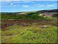NZ6307 : Grouse butt, Baysdale by Mick Garratt