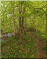 NH8148 : Path by the River Nairn by valenta