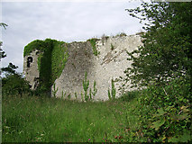 R4653 : Castles of Munster: Ballyculhane, Limerick (2) by Garry Dickinson