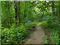 SE3137 : Path through the northern part of Gledhow Valley Woods by Stephen Craven