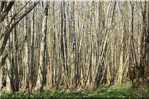 TQ5944 : Quarry Wood by N Chadwick