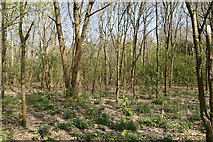 TQ5944 : Castle Hill Woods by N Chadwick