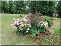 TQ2588 : Flower bed on Central Square, Hampstead Garden Suburb by David Howard