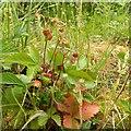 SK6044 : Gedling Country Park Wildlife, 5/6/2020 – 10 by Alan Murray-Rust