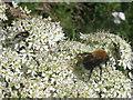 NT2469 : Wildlife in Braidburn Valley Park by M J Richardson