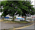 ST3288 : Trees on a Maindee corner, Newport by Jaggery
