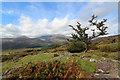 SH6448 : Hawthorn on Carnedd Melyn by Andy Waddington