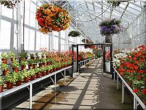 NJ9304 : Duthie Park: plant nursery in the winter gardens by Stephen Craven