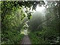 TF0820 : A misty, moisty, morning by Bob Harvey