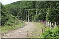 SO2003 : Uphill track by oak woodland, Cwm Big by M J Roscoe