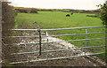 SS5223 : Pasture, Hall Farm by Derek Harper