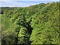 NZ1658 : River Derwent by Anthony Foster