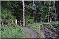 SU2518 : Deer fence following edge of woodland by David Martin