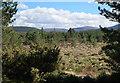 NJ0113 : Regenerating woodland by Hugh Venables