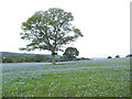 SE2246 : Flax field with tree, Farnley Park by Stephen Craven