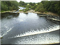 SE3146 : The Wharfe downstream from Harewood Bridge by Stephen Craven