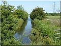 TQ6974 : Ditch, Shorne Marshes by Robin Webster