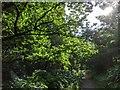 TF0820 : Backlit oak by Bob Harvey