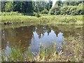 TM3099 : Bergh Apton Nature reserve - pond in restored wetland by ruth e