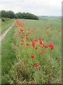 SE9561 : Bridleway  with  Poppy  edged  Oil  Seed  Rape  Field by Martin Dawes