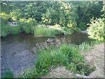SO3958 : The River Arrow (Pembridge) by Fabian Musto