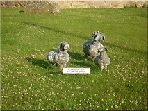 SO3958 : Sheep sculptures by St. Mary's Church (Pembridge) by Fabian Musto