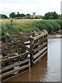 SE5737 : River Ouse from Cawood Swing Bridge by Chris Allen