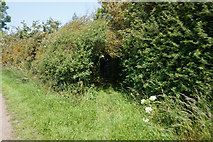SE7843 : Public right of way off Gale Carr Lane, Bielby by Ian S