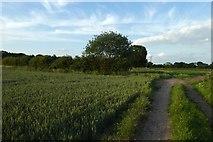 SE6648 : Bridleway to Elvington Lane by DS Pugh