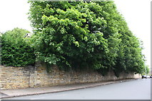 SE1434 : Stone wall in front of Ashwell House, Ashwell Road by Roger Templeman