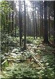 J3629 : Bracken undergrowth in Donard Wood by Eric Jones