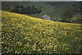 SD8998 : Buttercups and a Dales barn by Philip Halling