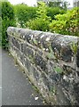 NS5574 : Plants growing in a wall by Richard Sutcliffe