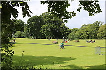 NS2209 : Picnic Area at the Swan Pond, Culzean Country Park by Billy McCrorie