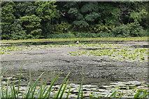 NS2209 : Swan Pond, Culzean Country Park by Billy McCrorie