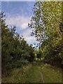 TF0820 : High summer by Bob Harvey