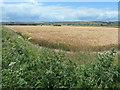 TA0865 : Barley field, Tuft Hill Farm by Christine Johnstone