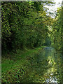 SJ6930 : Canal in Woodseaves Cutting, Shropshire by Roger  Kidd