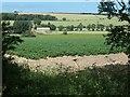 TA1567 : Potato field, south of Eastfield Farm by Christine Johnstone