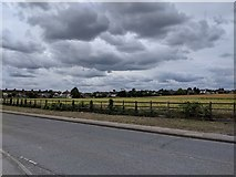 TQ5571 : Field next to Hawley Road (A225) by Paul Williams