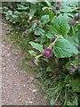 TF0820 : First flowers on the Burdock by Bob Harvey
