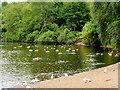 SD8303 : The Boating Lake, Heaton Park by David Dixon