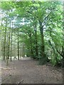 SX8083 : Older trees surviving on hedgebank near Tottiford reservoir by David Smith