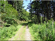 SN7079 : The track running up through Coed Dol-fawr by John Lucas